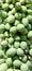 Stock Image : Плодоовощ Pawpaw