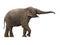 Stock Image : слон