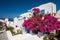 Stock Image : Традиционный греческий дом с большой бугинвилией цветет