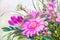 Stock Image :  Цветки, картина маслом