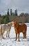 Stock Image : 两马在冬天