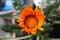 Stock Image :  在花瓶的花