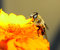 Stock Image :  在花的蜂