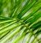 Stock Image :  棕榈树背景