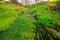 Stock Image : 用青苔盖的小河