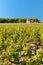 Stock Image :  红葡萄酒法国葡萄园