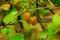 Stock Image :  背景接近的果子查出在白色的猕猴桃
