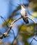Stock Image :  蜂鸟
