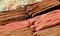 Stock Image : 香肠