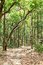 Stock Image :  Διαδρομή διαδρομής λάσπης μέσω του πυκνού δάσους Jim Corbett