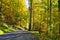 Stock Image :  Дорога в лесе в осени