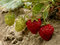Stock Image :  Aardbeien