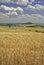 Stock Image : Agricultural landscape