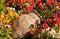 Stock Image : Ancient amphora between flowers