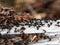 Stock Image : Ants