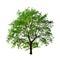 Stock Image : Apple tree isolated