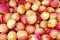 Stock Image : Apricots