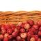 Stock Image :  Arándanos de montaña frescos, cesta aislada del vitis-idaea del Vaccinium