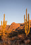 Stock Image : Arizona's Catalina State Park