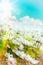 Stock Image : Art high light summer flowers Natural background