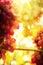 Stock Image : Art Ripe grapes