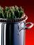 Stock Image : Asparagus Pot