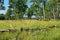 Stock Image : Aspen Meadow