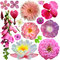 Stock Image : Assorted of colorful blooms