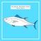 Stock Image : Atlantic blue-fin tuna sketch