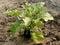 Stock Image :  aubergine