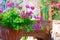 Stock Image : Augustus Graden of Capri island, Italy