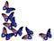 Stock Image : Australian flag butterflies on white