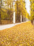 Stock Image : Autumn alley in classic park