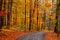 Stock Image : Autumn alley