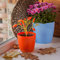 Stock Image : Autumn arrangement from decorative pepper and chrysanthemums