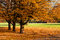 Stock Image : Autumn colorful trees in park