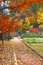 Stock Image : Autumn in Cranbrook house