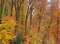 Stock Image : Autumn forest