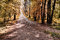 Stock Image : Autumn forest pathway