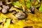Stock Image : Autumn ground