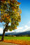 Stock Image : Autumn landscape with fog in bavaria germany