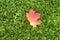 Stock Image : Autumn Leaf Lying on Grass