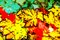Stock Image :  Autumn Leaves