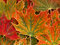 Stock Image : Autumn leaves background