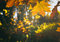 Stock Image : Autumn leaves in park