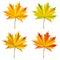 Stock Image : Autumn leaves.