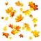 Stock Image : Autumn Maple Leaves