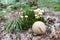 Stock Image : Autumn mushrooms