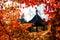 Stock Image : Autumn