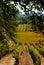Stock Image : Autumn in Napa
